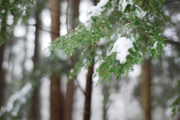 fogwalk01-30-0