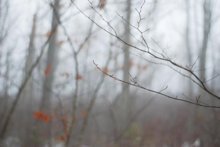 fogwalk01-30-3