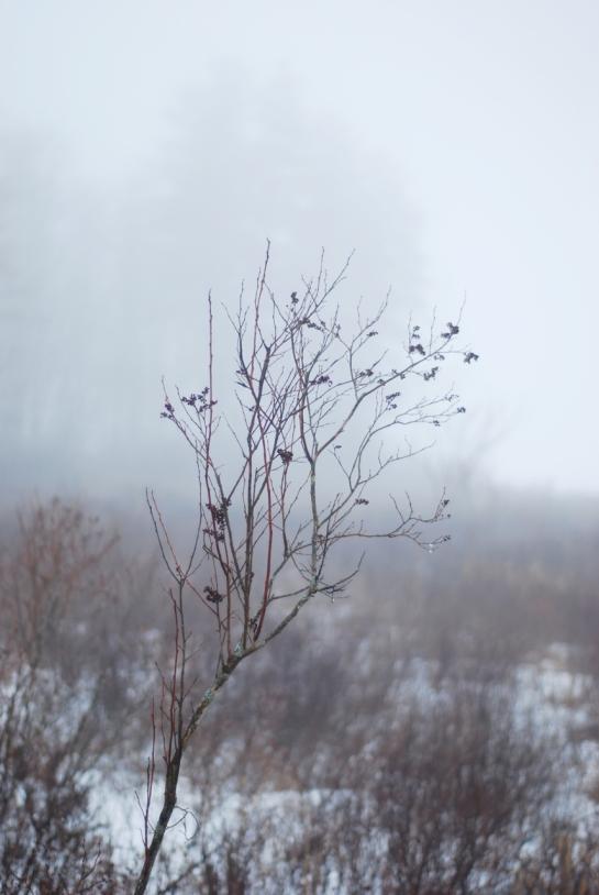fogwalk01-30-20