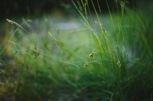 GardenUpdate_20170730_EmilyLordPhoto-29